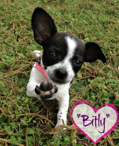 My sweet little Bitly #BittyBitly - BusyBeingJennifer.com
