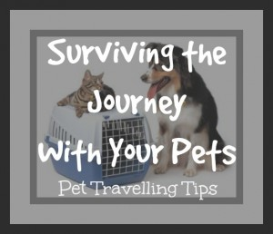 Pet Travelling Tips