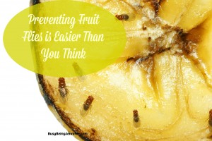Preventing Fruit Flies is easier than you Think! - BusyBeingJennifer.com