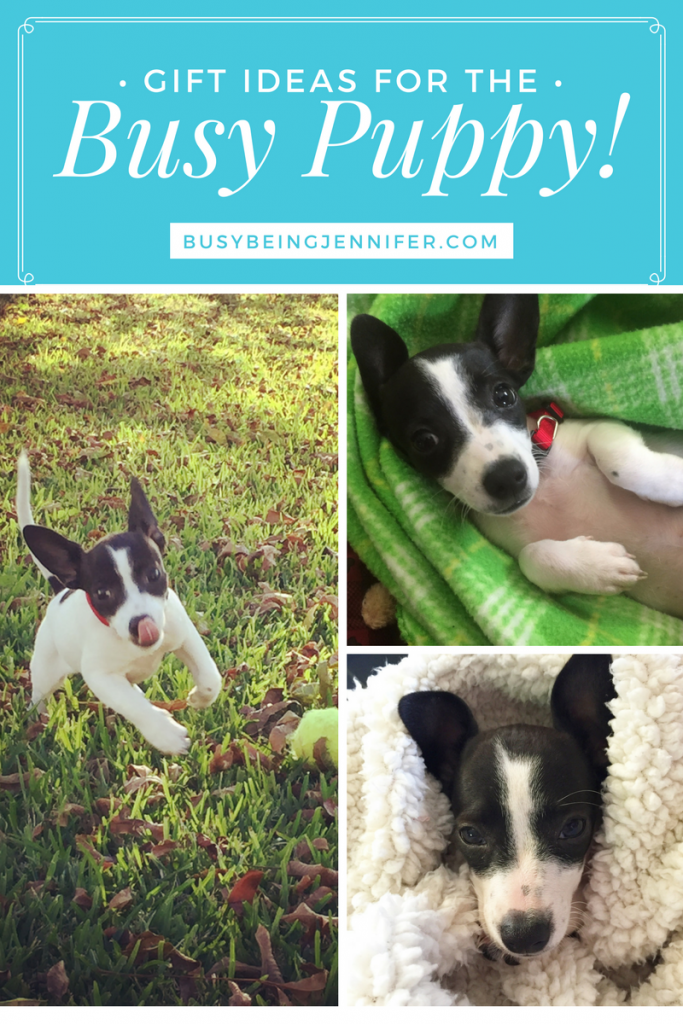 The best gifts and toys for busy (and occasionally distructive) puppy!