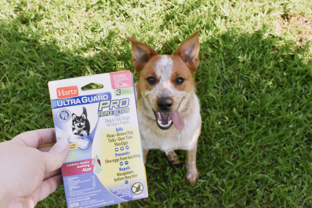 We've got some summer plans, my furbabies and I! I even formulated a bit of a summer bucket list to help us formulate our summer adventures & plans! And thanks to Hartz® UltraGuard Pro® the pups are protected from any pesky pests we may encounter! [ad]!