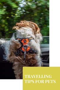 Whether you're going on a vacation, fall road trip, or moving to a new home, these pet travelling tips will help you safely move your pet
