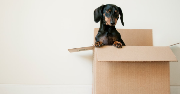 Whether your lease is up or you're moving to a new house, moving is stressful. But moving during the COVID-19 pandemic adds a whole new level of stress.